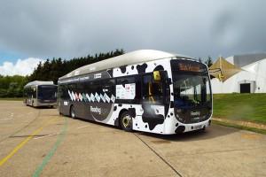 Автобус - рекордсмен (фото)